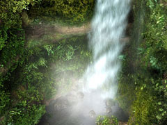 3D Animated Forest Waterfall