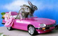 Rabbits in a Pink Car