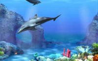 3D Dolphins