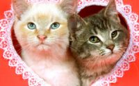 Cute Valentines Kittens