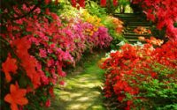 Lane of Red Flowers