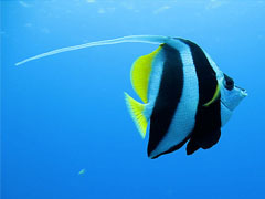 Striped Blue Fish
