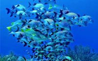 Whirlwind of Fish